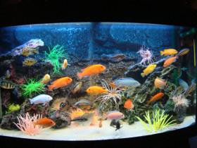 Бизнес на изготовлении аквариумов