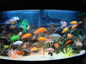 бизнес на аквариумах
