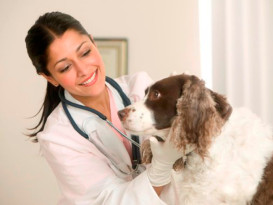 Ветеринарный бизнес: как его начать?