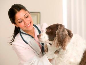 ветеринарный бизнес
